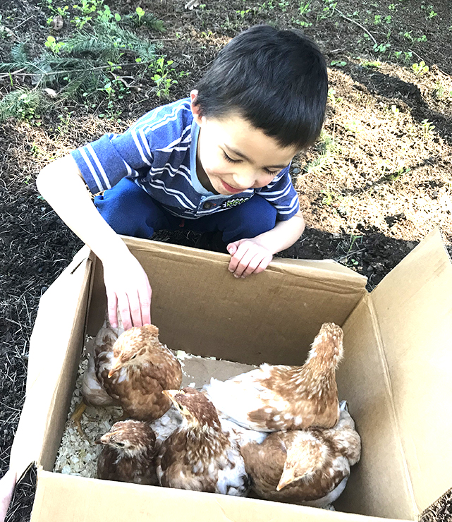 Kenny Meets Chickens